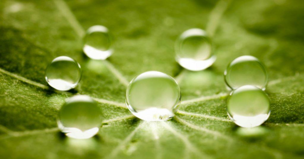 Balans4you Blog De kracht van waarderend leiderschap